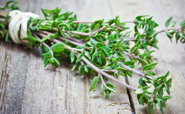 WINTER! Thyme Destroys Strep Throat, Flu Virus, & Fights Respiratory Infections
