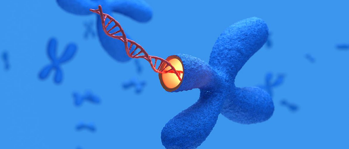 Telomere Lengthening: The Secret to Slowing Aging?